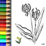 BW_Pflanze