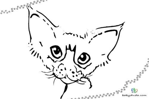 Ausmalbild Katzenkopf - Malvorlage realistische Tiere ausmalen