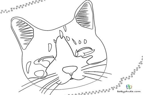 Katzenkopf Ausmalbild - Malvorlage Tierbilder ausmalen