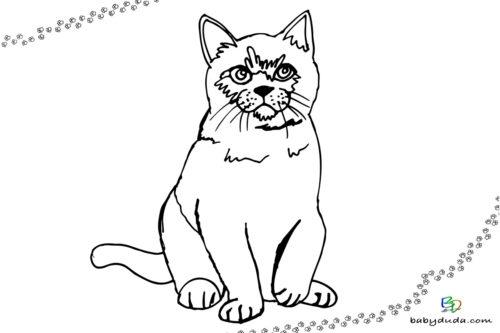 Katze Ausmalbild - Malvorlage Tierbilder ausmalen