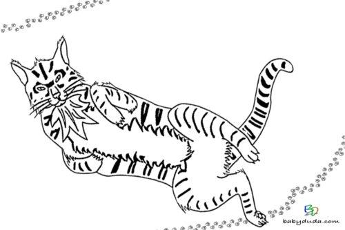 Kater spielt Ausmalbild - Malvorlage Tierbilder ausmalen