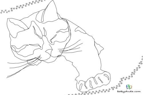 Schlafende Katze Ausmalbild - Malvorlage Tierbilder ausmalen