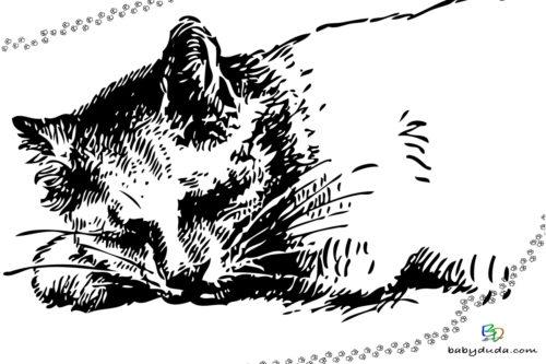 Realistische Katze Ausmalbild - Malvorlage Tierbilder ausmalen