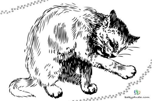 Katze putzt sich Ausmalbild - Malvorlage Tierbilder ausmalen