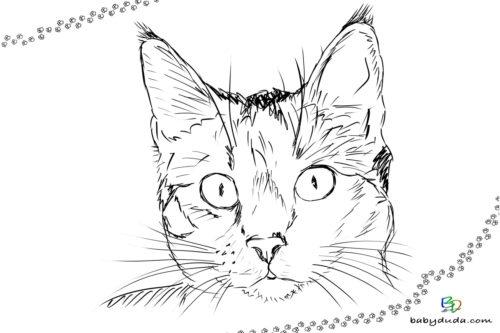 Realistischer Katzenkopf Ausmalbild - Malvorlage Tierbilder ausmalen