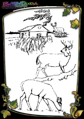 Herbst Tiere Ausmalbild Hirsch
