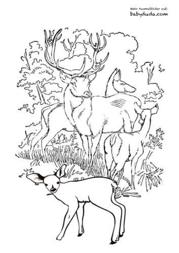 Herbst Tiere Ausmalbild Rehe