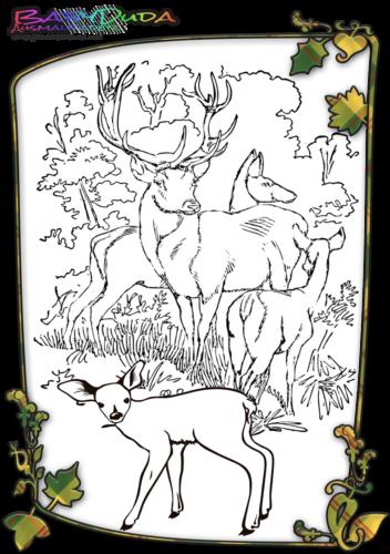 Herbst Tiere Malbild Hirsch