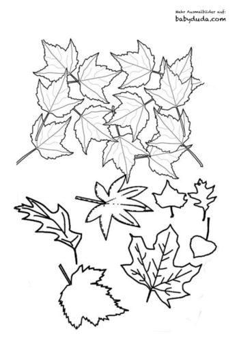 Herbst Ausmalbilder - Herbstmotiv Herbstlaub Tiere | BabyDuda » Malbuch