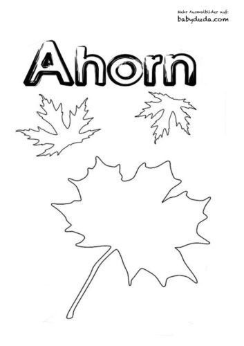 Herbstblatt-Ausmalbilder-Ahorn