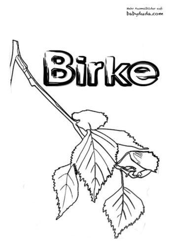 Herbstblatt-Ausmalbilder-Birke