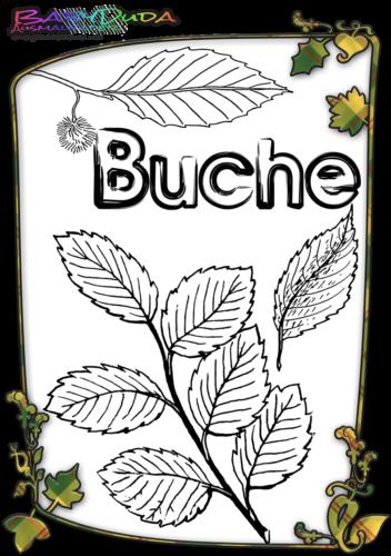 Herbstblatt-Ausmalbild-Buche