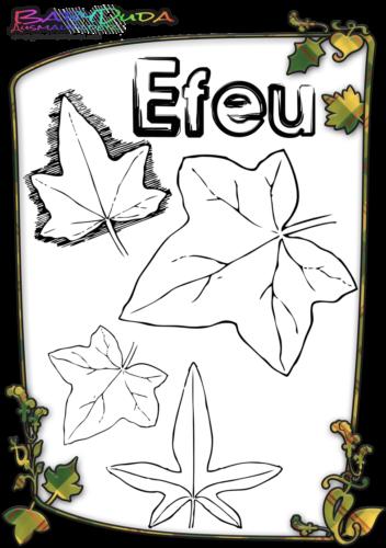 Herbstblatt-Ausmalbild-Efeu