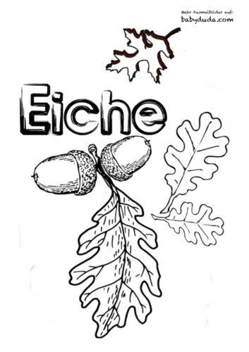 Herbstblatt-Ausmalbilder-Eiche