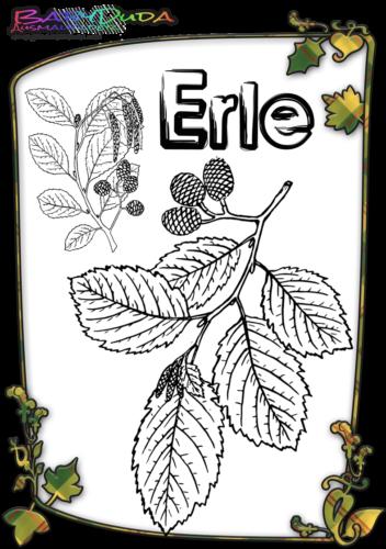Herbstblatt-Ausmalbild-Erle