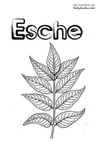 Herbstblatt-Ausmalbild-Esche