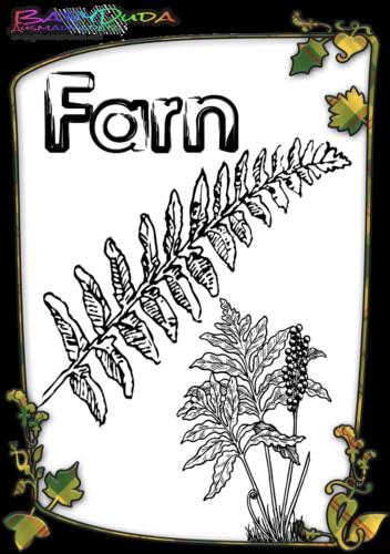 Herbstblatt-Ausmalbild-Farn