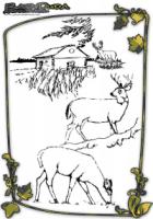 Malvorlagen Tierbilder - Tiere im Herbst Ausmalen. Malbuch mit Vorlagen mit tollen Waldtieren: Eichhörnchen, Schnecke, Reh, Hirsch, Igel im Herbstwald.
