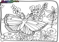 Fruehling-Ausmalbild-Schmetterling