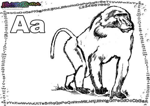Alphabet Tierbild Buchstabe A-Affe