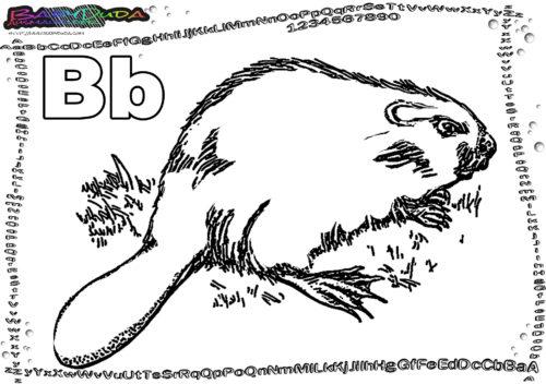ABC Tierbild Buchstabe B-Biber