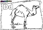 ABC-Buchstabe-D-Dromedar