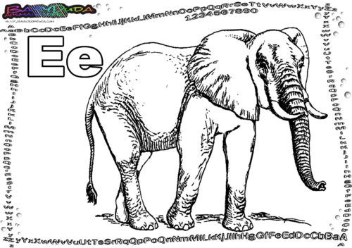 ABC Alphabet Buchstabe E-Elefant