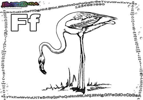 ABC Malbild Buchstabe F-Flamingo