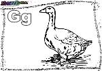 ABC-Buchstabe-G-Gans