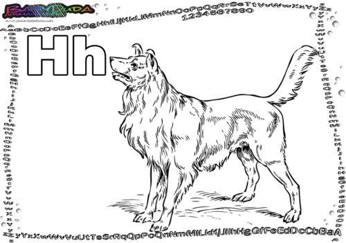 ABC Tier Buchstabe H-Hund