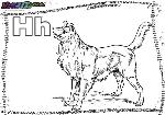 ABC-Buchstabe-H-Hund