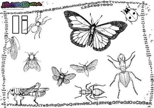 ABC Tier Alphabet Buchstabe I-Insekten