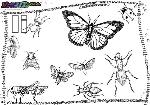ABC-Buchstabe-I-Insekten