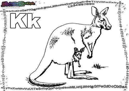 ABC Tieralphabet Buchstabe K-Känguru