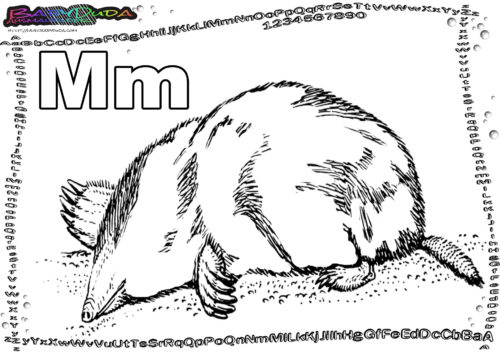 ABC Tier Buchstabe M-Maulwurf