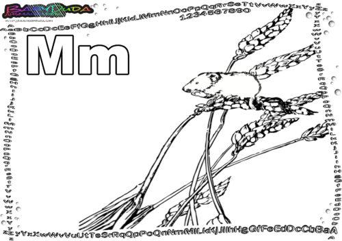 ABC Animal Buchstabe M-Maus