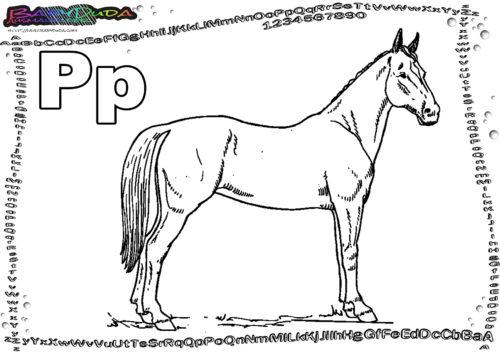 ABC Ausmalbild Tier Buchstabe P-Pferd