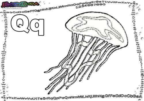 ABC malen Buchstabe Q-Qualle