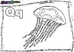 ABC-Buchstabe-Q-Qualle