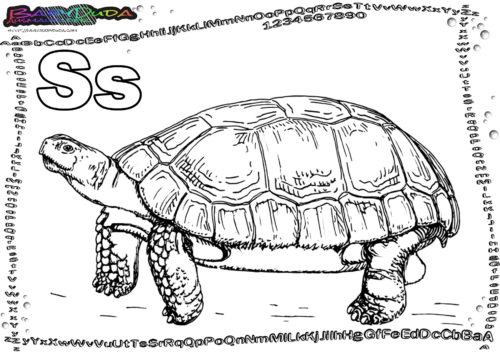 ABC Tiervorlagen Buchstabe S-Schildkröte