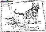 ABC-Buchstabe-T-Tiger