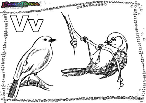 ABC Tier-Ausmalbild Buchstabe V-Vogel