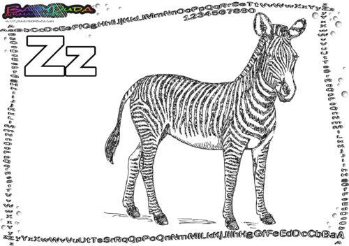 ABC Tierbild Alphabet Buchstabe Z-Zebra