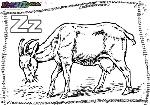 ABC-Buchstabe-Z-Ziege