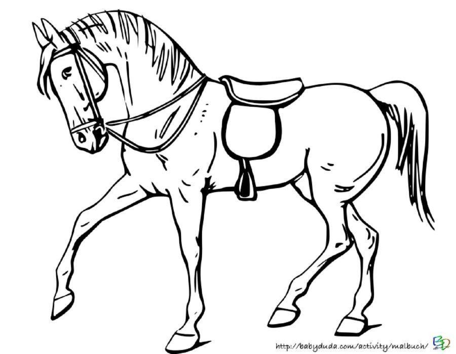 pferde malvorlagen zum ausmalen  coloring and malvorlagan