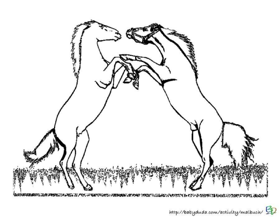 pferdebilder ausmalen pferdek246pfe ausmalbilder babyduda