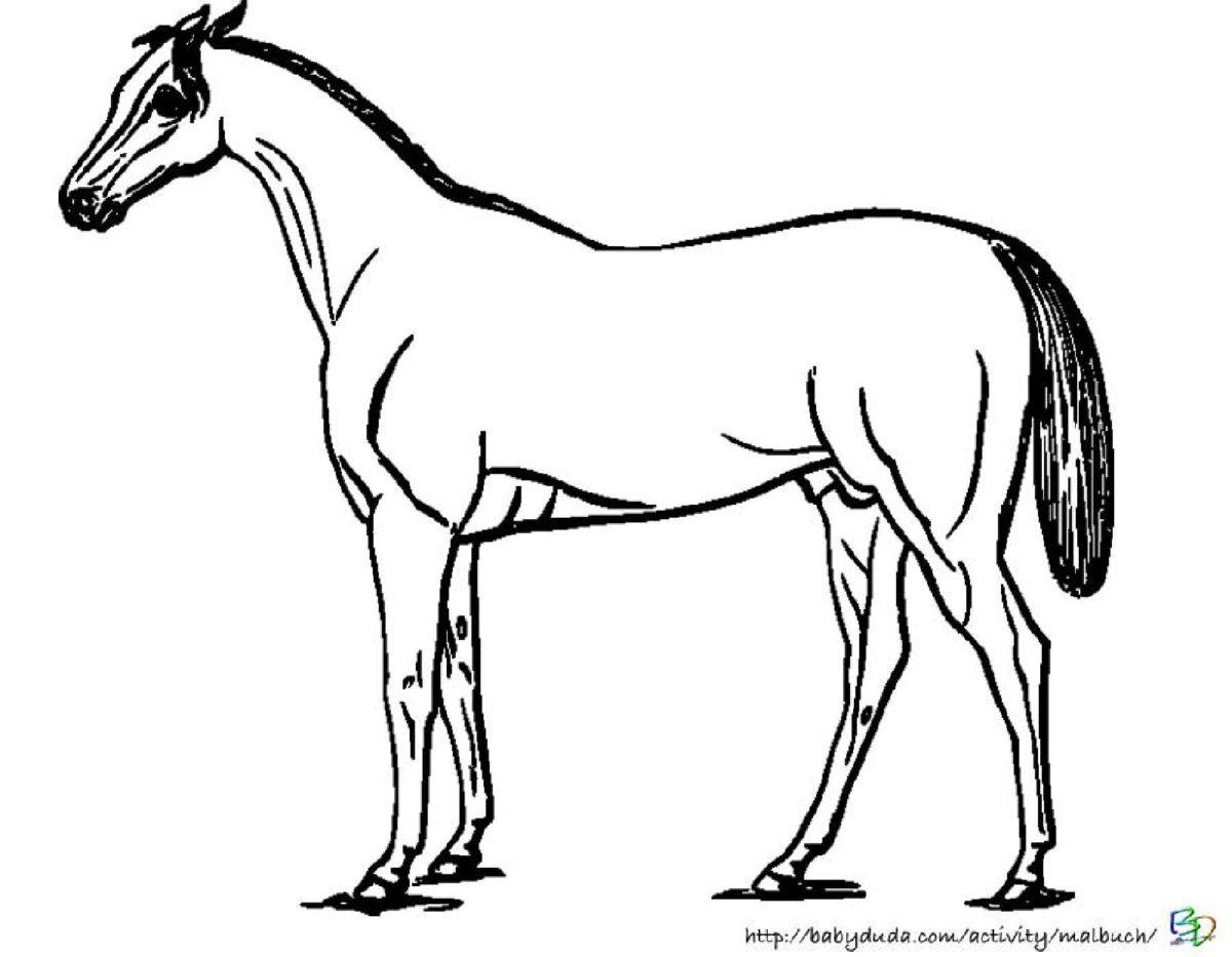 Pferde Ausmalbilder Zum Ausdrucken Kostenlos : Pferde Ausmalbilder F R Kinder Zum Ausdrucken