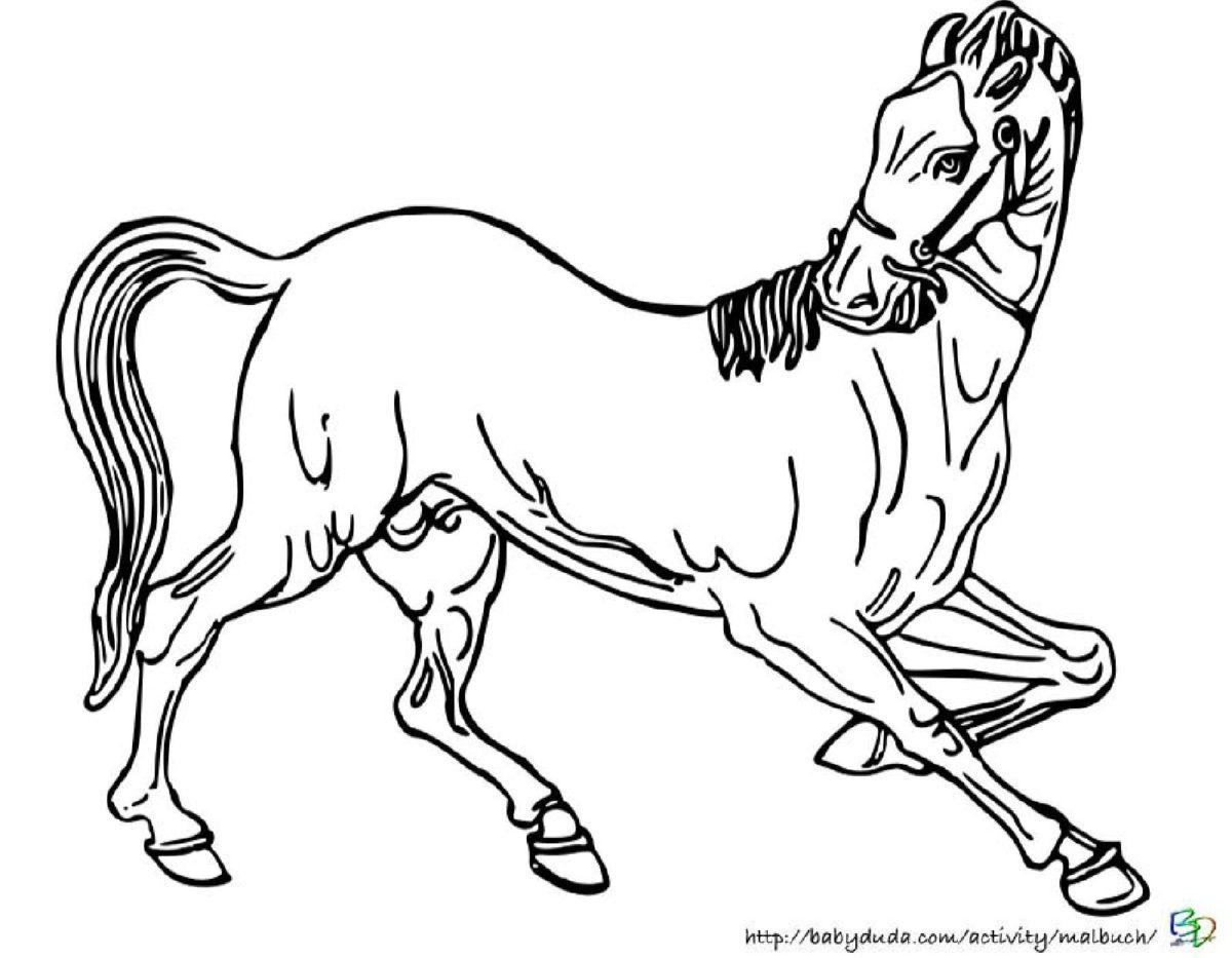Viele tolle Pferde Ausmalbilder mit realistischen Vorlagen ...