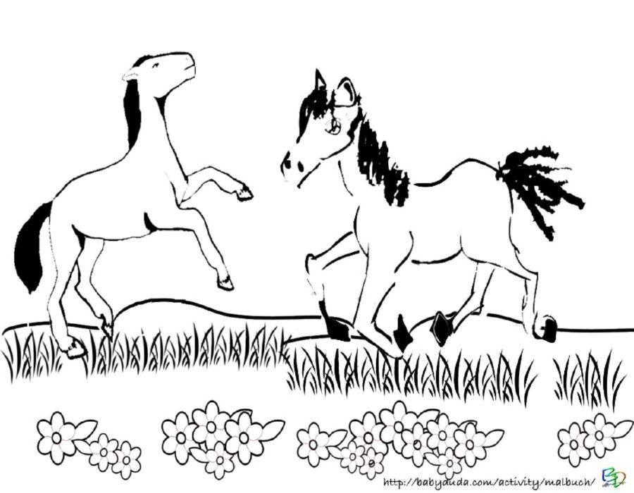 Ausmalbild Pferde zum Ausmalen kindgerecht