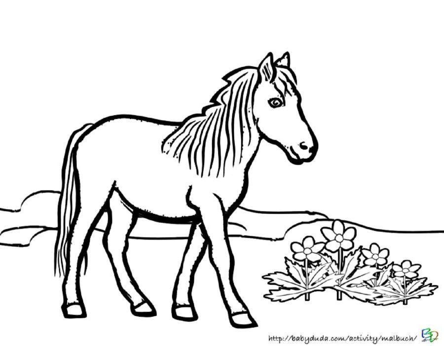Malvorlage Pferd Ausmalen